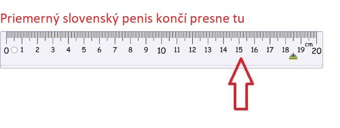 priemerná dĺžka penisu