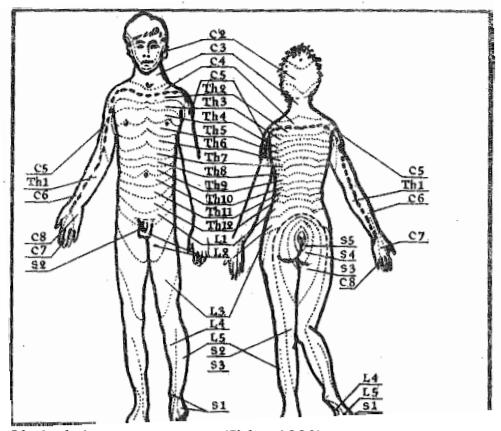 regenerácia penisu